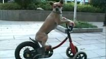 Clever canine shows off many talents