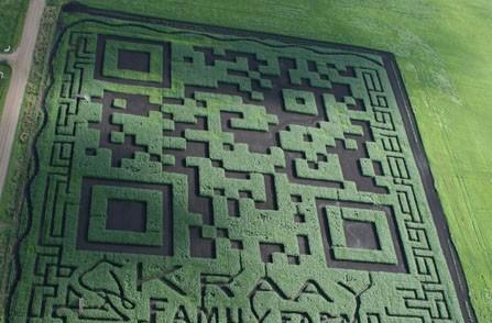 Visualized: World's largest QR code is a Canadian maize maze
