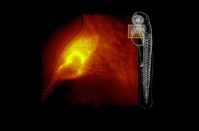 A new microscope can quickly generate 3D images of living organisms