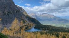 Larch hunting: Trails in Banff, Kananaskis and Calgary lined with the golden trees