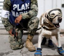 Mexico earthquake: rescue dog who has saved 52 lives in her career searches for more victims