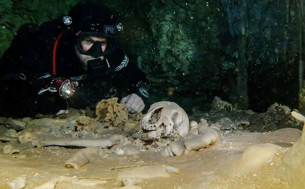 Remains of a Pleistocene bear from 2.5 million years ago, in the Sac Actun underwater cave in Quintana Roo state, Mexico, in an image published by the National Institute of Anthropology and History (INAH) on February 19, 2018 (AFP Photo/HO)