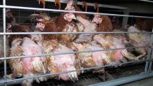 """""""On a bon espoir que cela aboutisse"""" : des associations lancent un projet de référendum d'initiative partagée contre la maltraitance animale"""