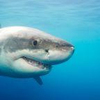 Woman, 27, Bit by Shark Twice While Swimming off of Hawaii's Big Island