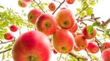 Las frutas habrían sido fundamentales para la evolución del cerebro humano
