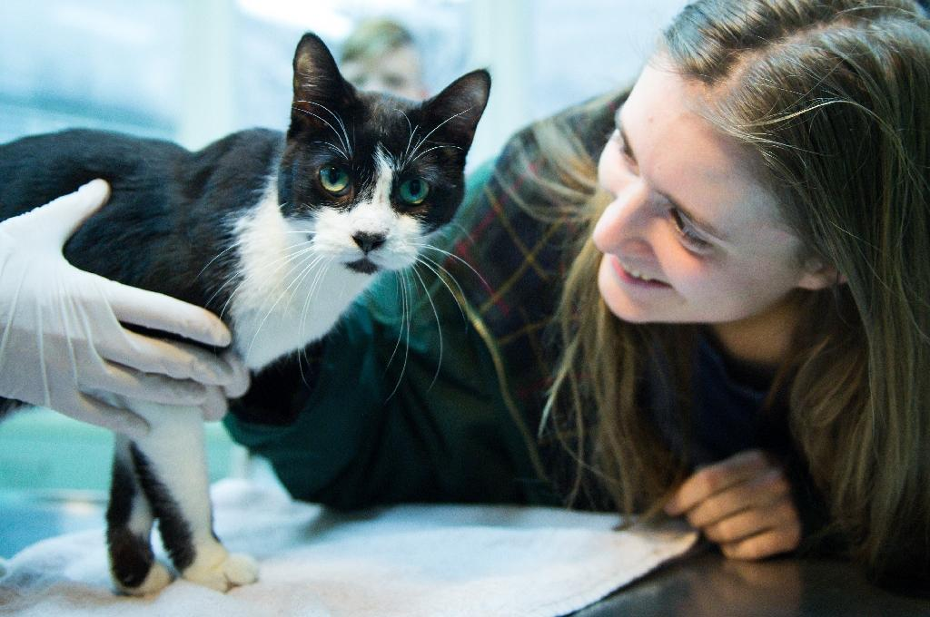 Elena Hanke poses for a photo with her cat Miko at the animal refuge centre in Berlin on December 26, 2105. The cat has being found again after it went missing in 2008