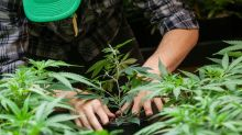 3 U.S. Cannabis Stocks With the Most Upside