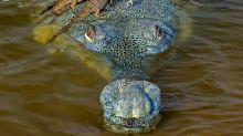 Wildlife Photographer of the Year: How many crocodiles can you see?