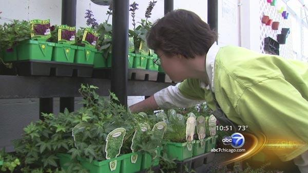 ABC7 In Your Neighborhood: Seguin Gardens and Gifts