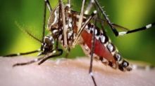 Dengue antibodies could provide immunity against COVID-19, reports an unpublished study