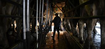 Better year expected for dairy farmers
