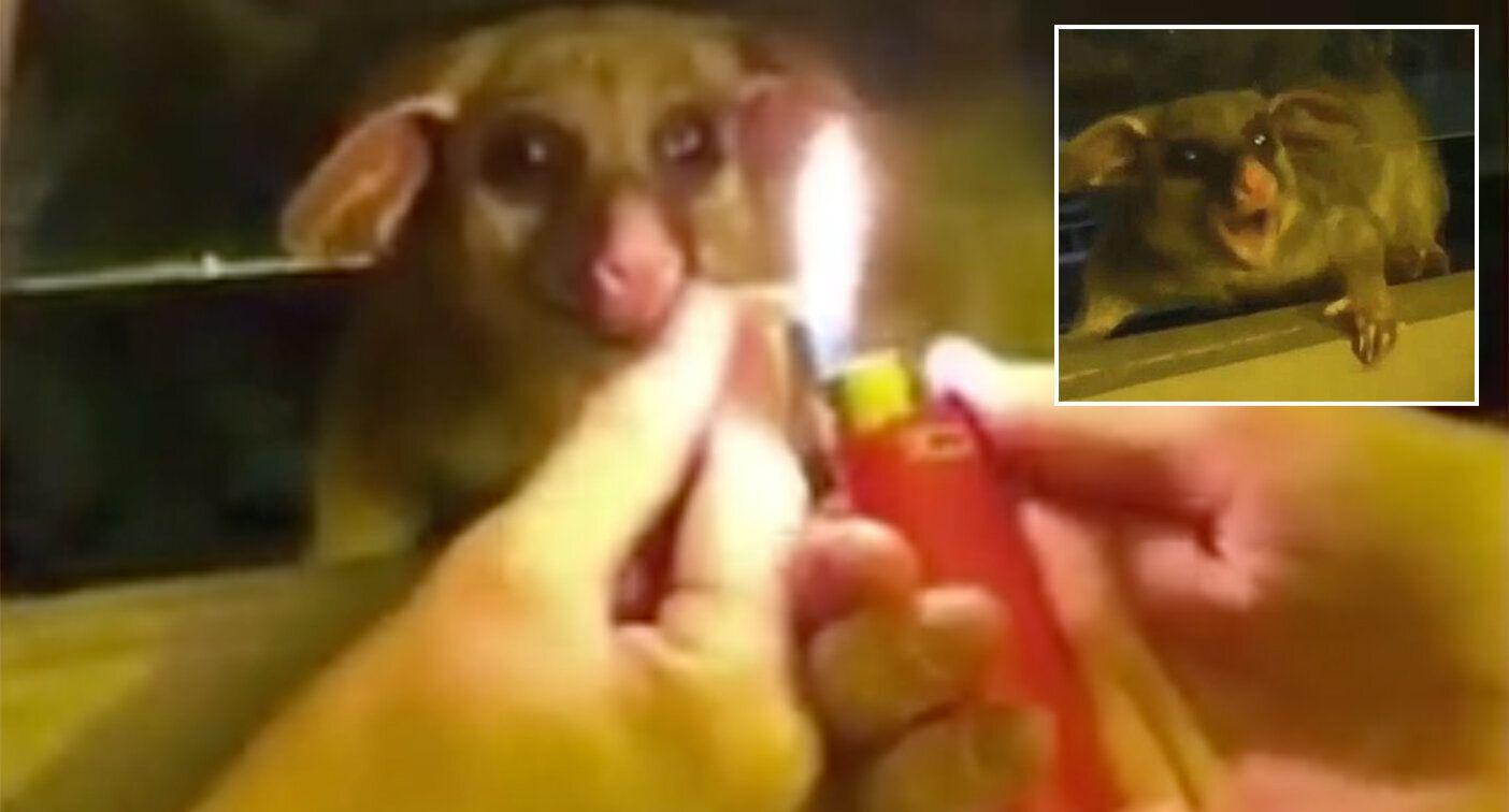Video shows possum given a joint through window