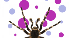 This Frightening Spider News Is Here To Haunt Your Dreams