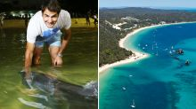'We can lock it down': Queensland resort's extraordinary plan to save NRL season
