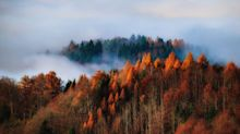 25 Surprising Things You Never Knew About Fall