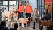 Sugarland's Jennifer Nettles shares stage with some furry friends for charity