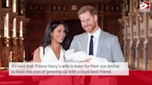 Meghan Markle 'wants to adopt a rescue dog for son Archie to grow up with'