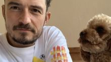 Orlando Bloom announces death of missing dog Mighty