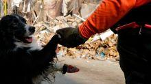A tres metros de las señales de vida: un perro chileno protagonista del rescate en Beirut