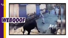 Video of Man Gored By Bull Shared With a False Communal Spin
