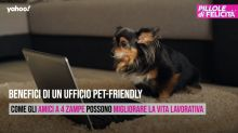 Benefici di un ufficio pet-friendly