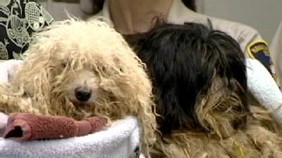 Humane Society Calls For Stricter Breeding Rules