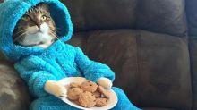 La embajada de EE.UU. en Australia se disculpó por enviar una falsa invitación con la foto de un gato en pijama