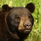 3 signs bears are poised to devour the stock market bulls