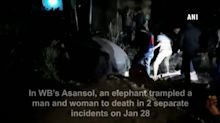 Two trampled to death by elephant in West Bengal's Asansol
