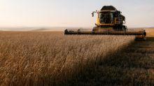 'Dear Vladimir': VTB asks for Putin's help to create Russian grain champion
