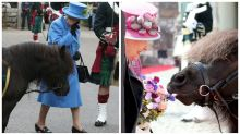 Pony who bit Queen's flowers last year defecates in front of her