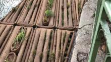 Paris: un radeau végétalisé installé sur le canal Saint-Martin