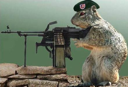 GPS-equipped spy squirrels 'arrested' by Iranians