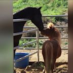 Ranch Owner Says Someone Stole Her Miniature Horse Amid Woolsey Fire