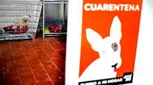 Perritos rescatados en el metro de la CDMX tienen su 'wish list' estas Navidades