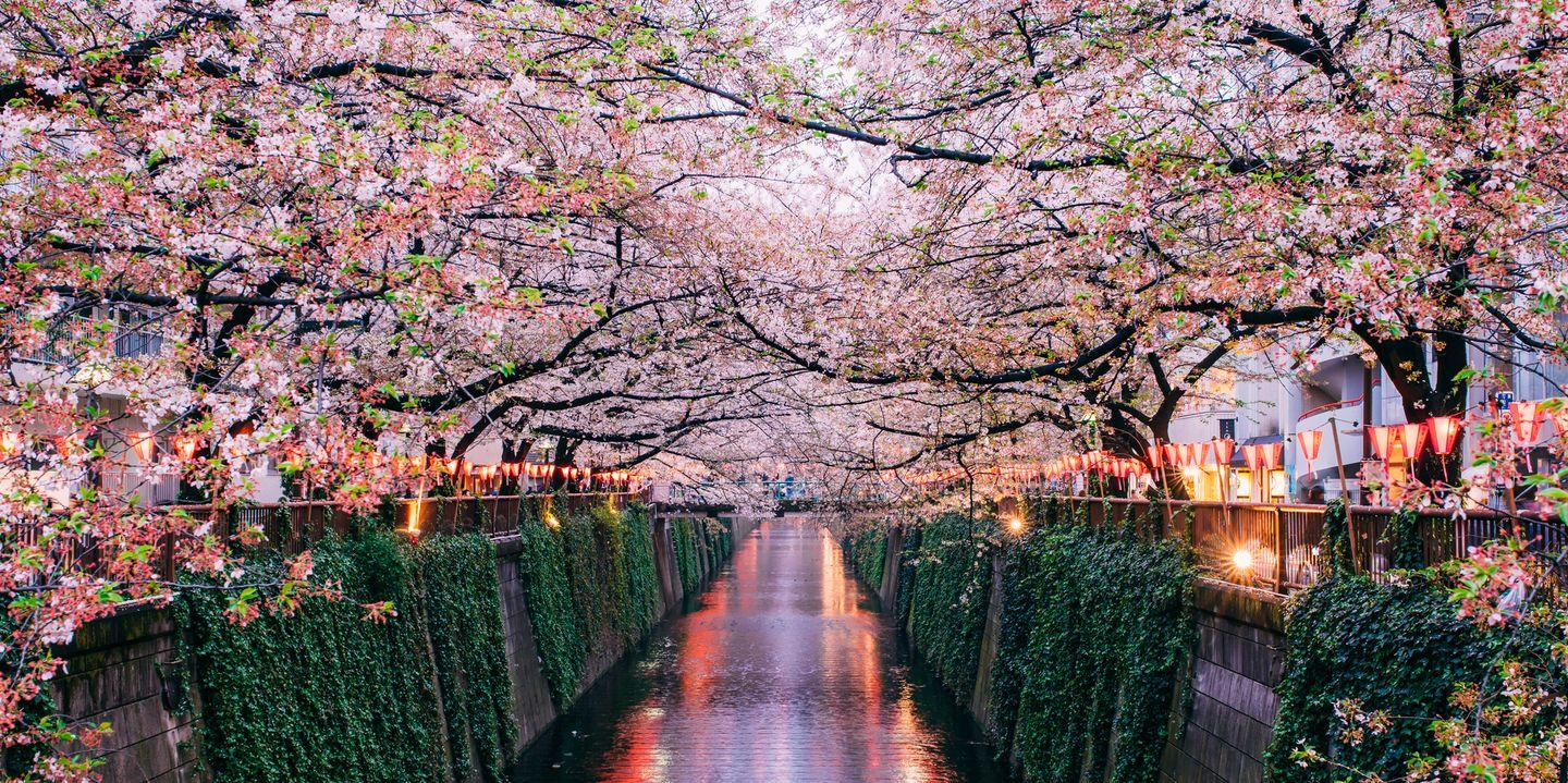 Take A Virtual Tour Of Gorgeous Cherry Blossoms Trees From Around The World