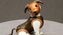 Paw patrol: Sony offers robocop dog at home