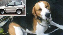 Elderly owner devastated after car stolen with beagle inside