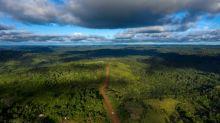 Doze milhões de hectares de florestas tropicais destruídos em 2018