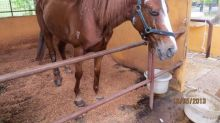 Gallop Stable fined $9,000 for mistreating horse, to file appeal