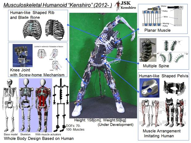 Kenshiro robot has muscle and bones, is ready to stretch its way into your nightmares