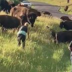 Video shows bison attack woman taking photos at state park