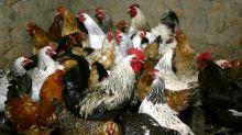 Risk of human spread of H5N8 bird flu deemed low - WHO