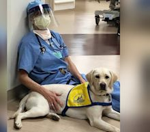 'She saves us': A service dog in training supports hospital staff during coronavirus pandemic