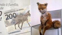A internet não imaginava que o lobo-guará da nota de R$ 200 seria tão feio; veja memes