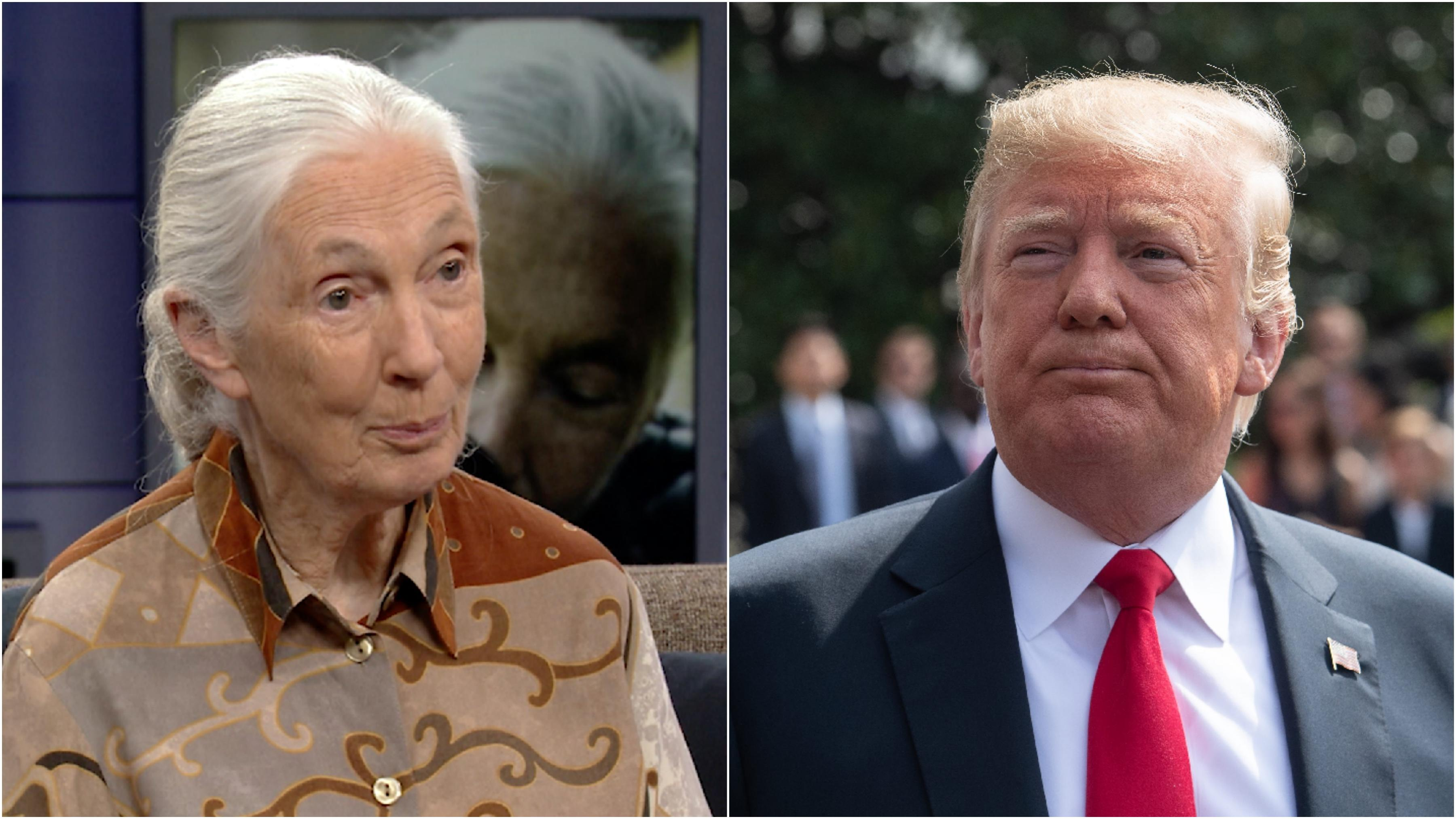 Jane Goodall on the 'shocking' damage Donald Trump has done to the environment