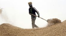 China craving for Senegal peanuts rattles local business