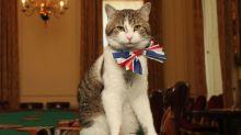 Internationaler Katzentag: Diese Miezen sind ganz schön prominent