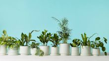 Where to shop for the best indoor plants that will ship right to your door