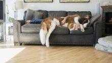 #Hugyourdogday: Warum du heute unbedingt deinen Hund umarmen solltest